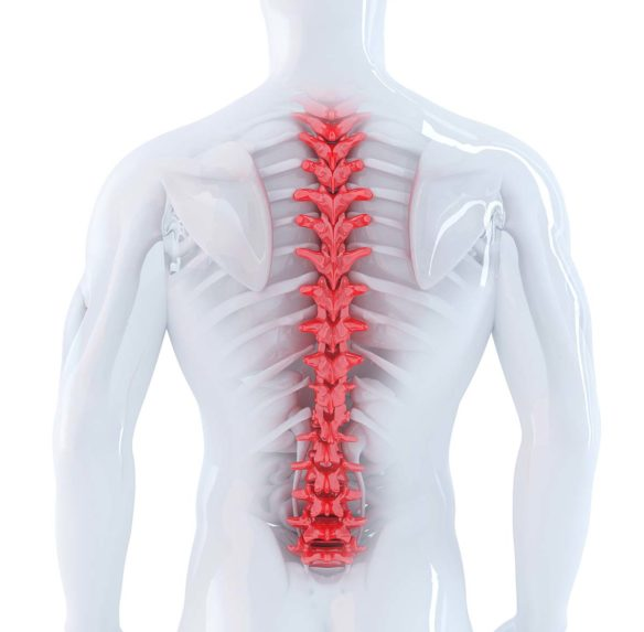 Spine Pain Anatomy - Oklahoma City - Orthobiogen